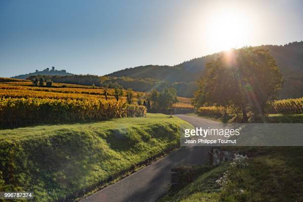 enotourism in france - a road to the wineyards in alsace, eguisheim, near colmar, france - lorraine stock pictures, royalty-free photos & images