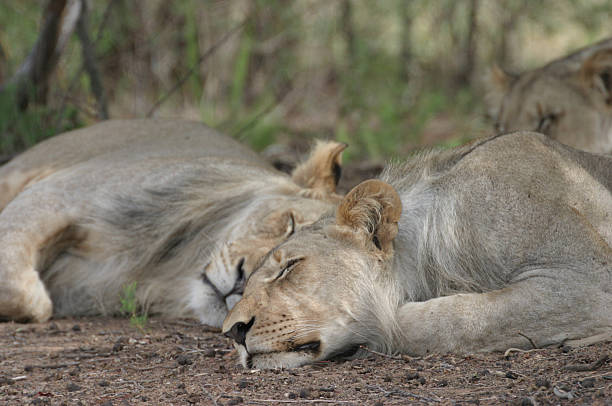 Entabeni Safari Conservancy, Waterberg Mountains, Limpopo Province, South Africa