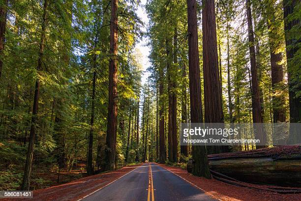 entering redwoods - humboldt redwoods state park stock photos and pictures