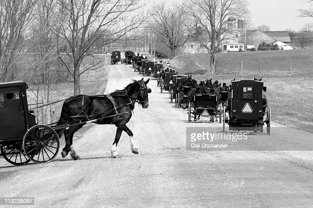 Entering the mennonite line on road