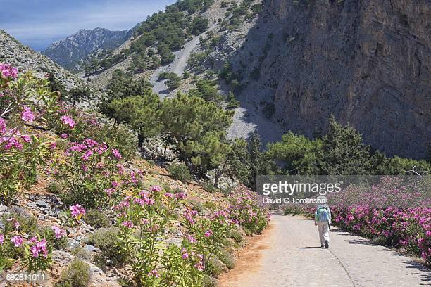 entering the samaria gorge, agia roumeli, crete - creta fotografías e imágenes de stock