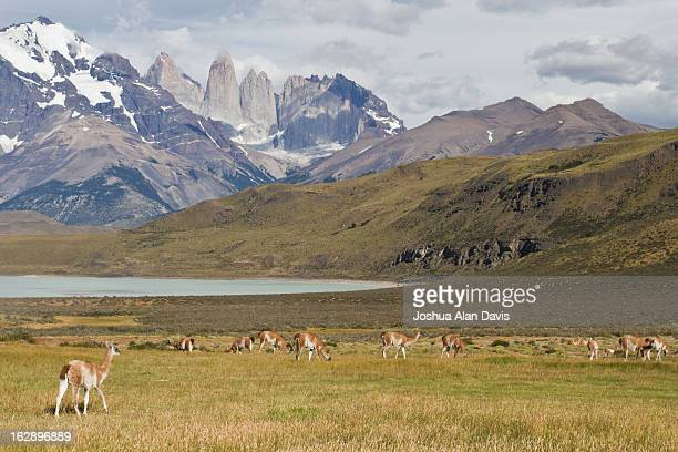 entering torres del paine - joshua alan davis stock pictures, royalty-free photos & images