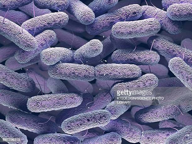 enterobacteriaceae bacteria - magnification stock pictures, royalty-free photos & images