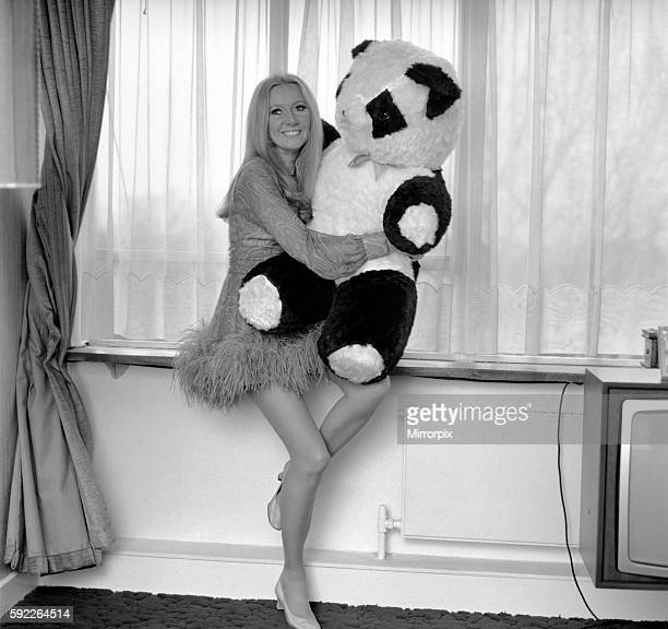 Presenter Clodagh Rodgers at her home in London with her cuddly Christmas present a truly giant Panda December 1969 Z11993