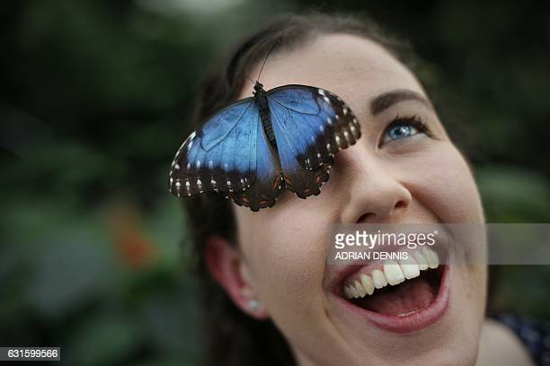 Entomologist Anna Platoni poses for a photograph with a butterfly perched on her forehead to mark the opening of Butterflies in the Glasshouse at RHS...