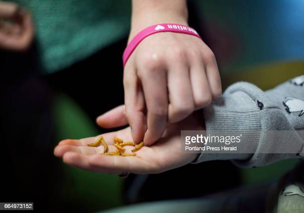 Entosense a company that sells edible insects Thirteenyear old Julia Broadbent shares mealworm snacks with a friend