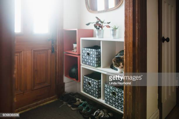 entrance hall with storage compartment and a cat inside - entrata foto e immagini stock