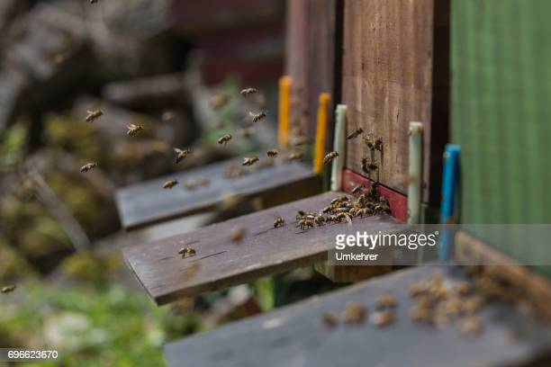 entrance hole at a beehive - queen bee stock pictures, royalty-free photos & images