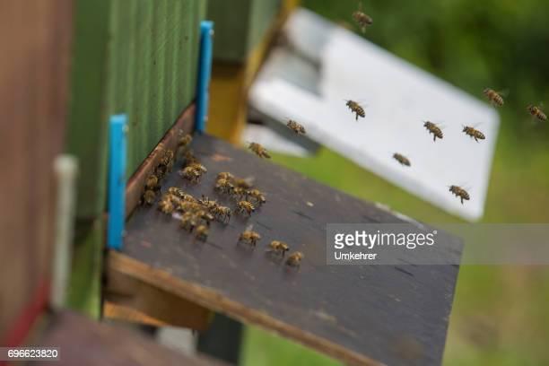 Queen bee photos et images de collection getty images - Hole d entree ...