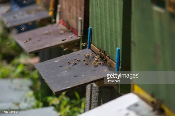 flugloch an einen bienenstock - umkehrer stock-fotos und bilder