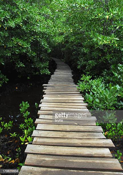 Entrance of the mangrove