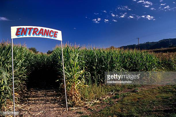 Entrance to corn maze under clear blue sky