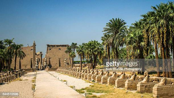entrance to the temple of luxor, luxor, egypt - antico egitto foto e immagini stock