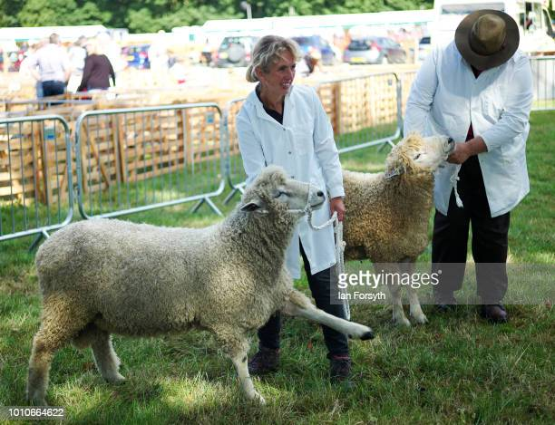 Entrants wait to be judged during 152nd the Ryedale Country Show on July 31 2018 in Kirbymoorside England Held in Welburn Park near Kirbymoorside in...