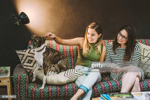 Unternehmer spielen mit Hund sitzend auf Sofa im Kreativbüro