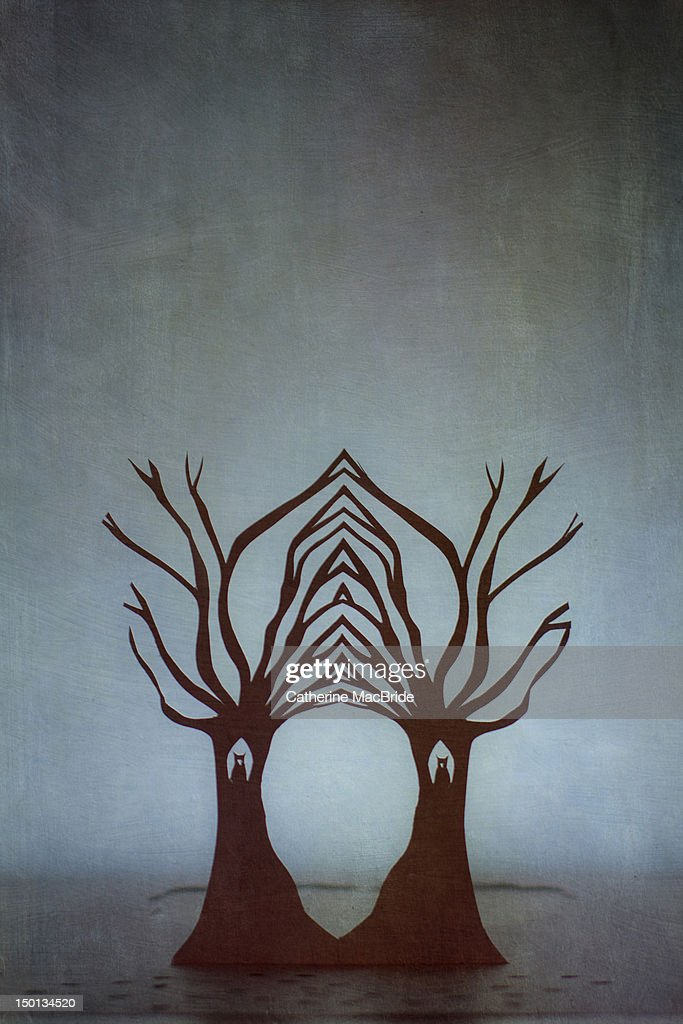 Entwined trees : Stock Photo