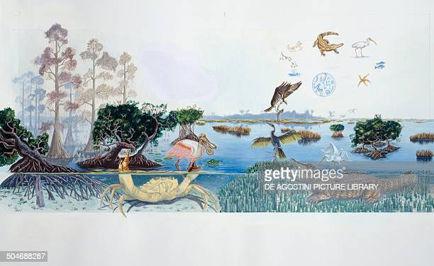 Environment and wildlife of Everglades salty marshes Florida United States of America drawing