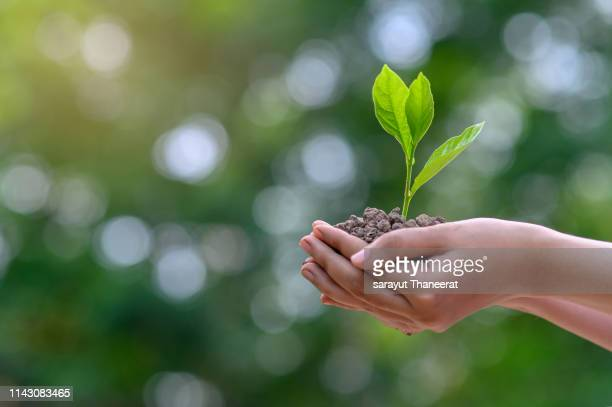 environment earth day in the hands of trees growing seedlings. bokeh green background female hand holding tree on nature field grass forest conservation concept - environment stock pictures, royalty-free photos & images