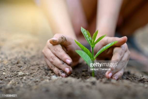 environment earth day in the hands of trees growing seedlings. bokeh green background female hand holding tree on nature field grass forest conservation concept - world kindness day - fotografias e filmes do acervo