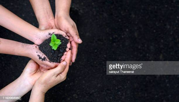 environment earth day in the hands of trees growing seedlings. bokeh green background female hand holding tree on nature field grass forest conservation concept - day stock pictures, royalty-free photos & images