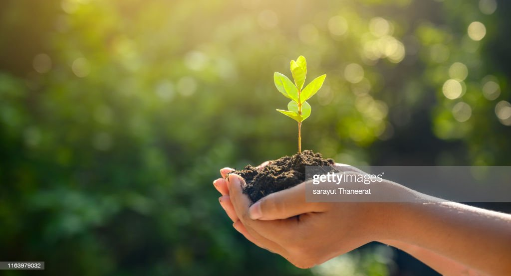 environment Earth Day In the hands of trees growing seedlings. Bokeh green Background Female hand holding tree on nature field grass Forest conservation concept : Stock Photo
