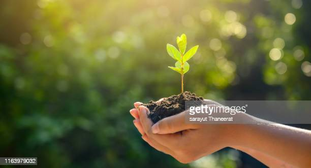 environment earth day in the hands of trees growing seedlings. bokeh green background female hand holding tree on nature field grass forest conservation concept - emoção positiva imagens e fotografias de stock