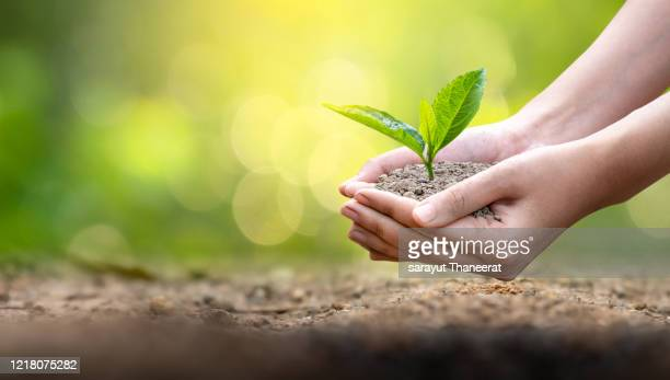 environment earth day in the hands of trees growing seedlings. bokeh green background female hand holding tree on nature field grass forest conservation concept - 苗 ストックフォトと画像