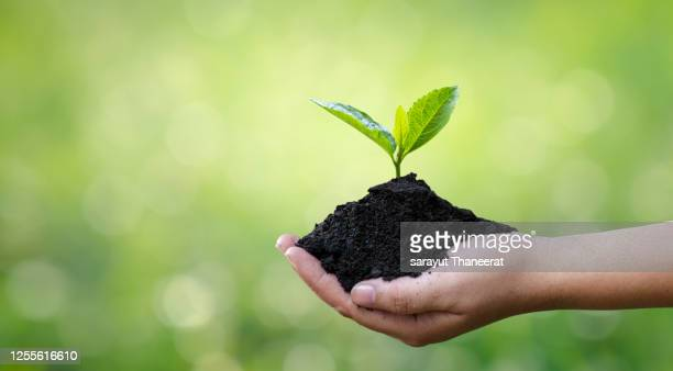 environment earth day in the hands of trees growing seedlings. bokeh green background female hand holding tree on nature field grass forest conservation concept - earth day foto e immagini stock
