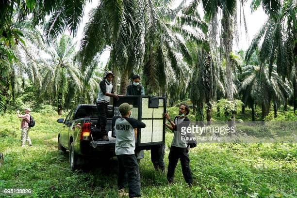 Environmental activists at 'The Human Orangutan Conflict Response Unit Orangutan Information Center' carry cage during saves the Sumatran orangutan...
