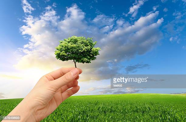 environmental conservation - create and cultivate stock pictures, royalty-free photos & images