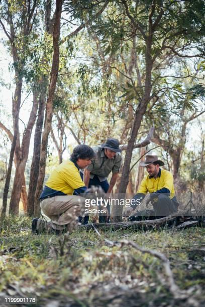 equipe ambiental e de conservação no bush - destruição - fotografias e filmes do acervo