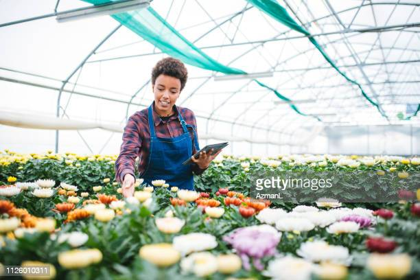 environmentalist using digital tablet in greenhouse - garden center stock pictures, royalty-free photos & images
