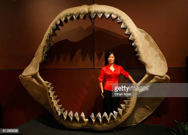 Enya Kim from the Natural History department at auctioneers Bonhams Butterfields stands inside one of the world's largest set of shark jaws comprised...