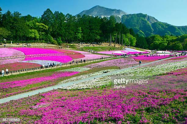 epic landscapes - saitama prefecture stock pictures, royalty-free photos & images