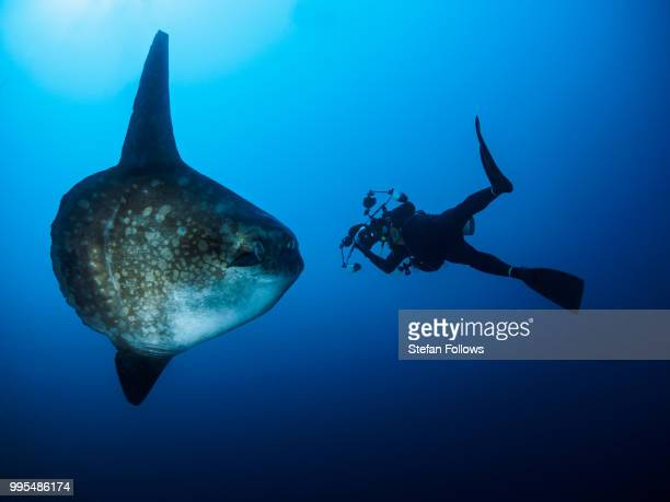epic ... ! - sunfish stock photos and pictures
