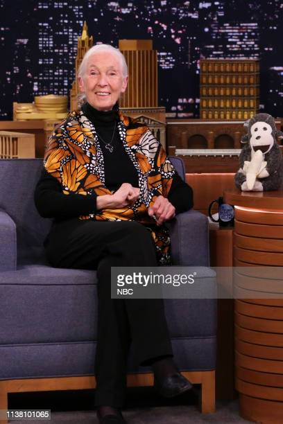 Primatologist Dr Jane Goodall during an interview on April 19 2019