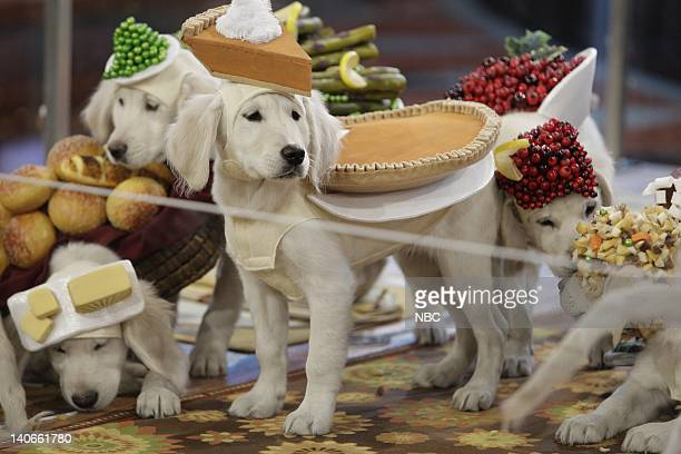 BRIEN Episode 113 Air Date Pictured Puppies dressed as Thanksgiving dinner on November 26 2009 Photo by Paul Drinkwater/NBCU Photo Bank