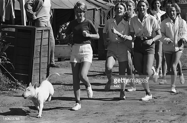 SHEEP W*A*S*P*S Episode 22 Aired 3/1/77 Pictured Meatball the dog Andi Garrett as Major Deborah Watkins Deka Beaudine as Polly Melinda Naud as Elsa...