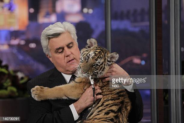 Host Jay Leno plays with a baby Tiger on March 9 2010 Photo by Paul Drinkwater/NBCU Photo Bank