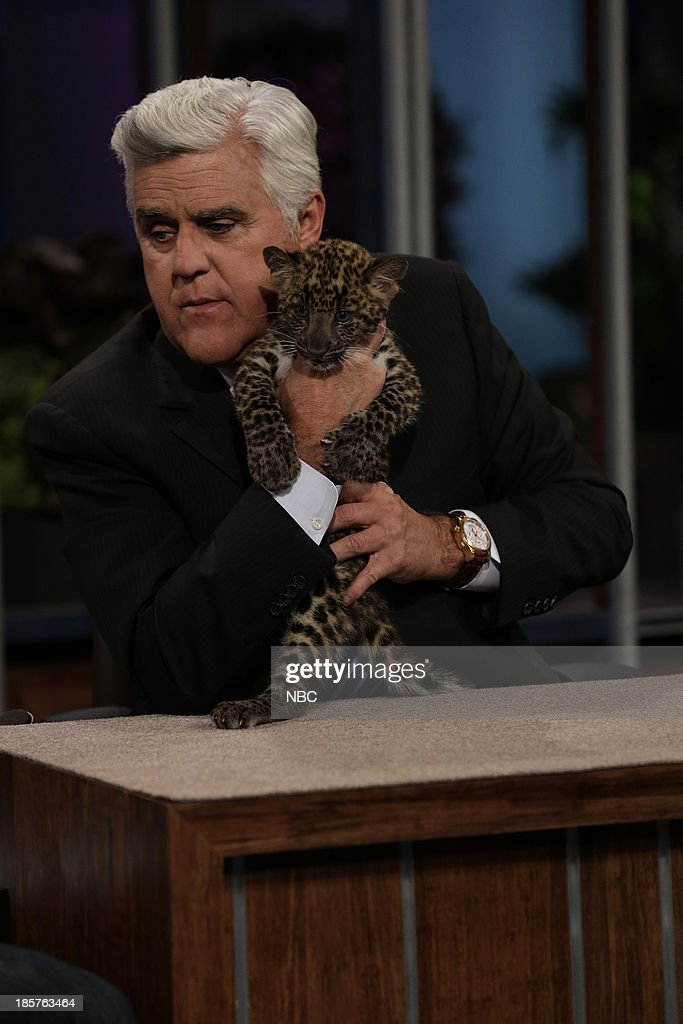 Host Jay Leno with an African leopard on October 24, 2013 --