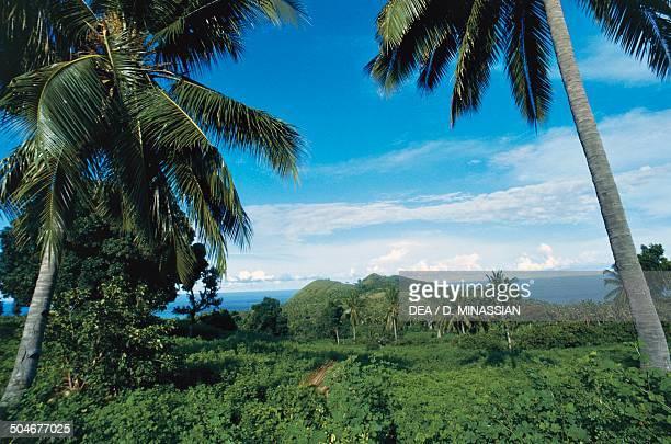 Equatorial vegetation Comoros