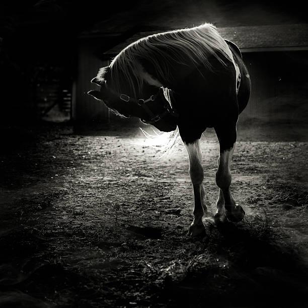 Equestrian Illumination