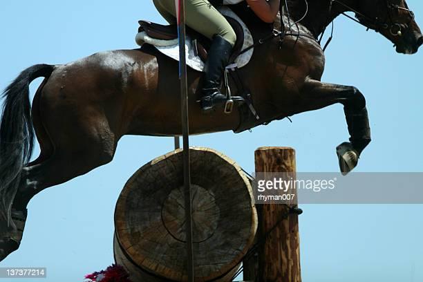 Equestrian jumper on blue