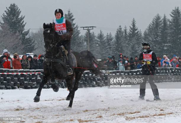 Equestrian Rosemarie Wesarg rides on her horse as she pulls her teammate Mario Suppe across an obstacle course in Elend Germany 19 January 2013 More...