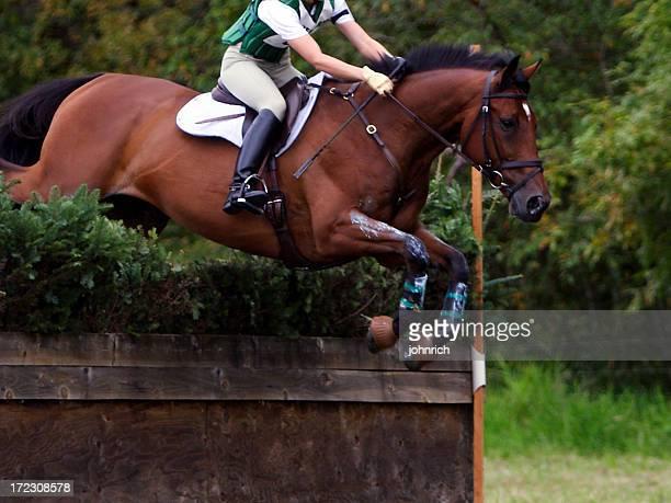 equine athlete 4 - paard paardachtigen stockfoto's en -beelden