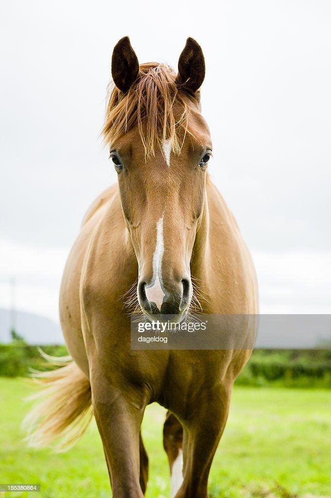 equine beauty : Stock Photo