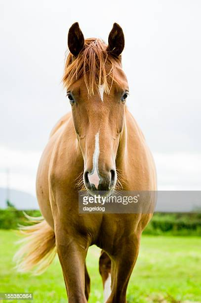 equine beauty
