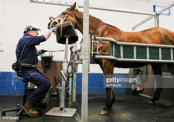 Equine dental technician Mark Thorne conducts dental work on a horse at the Hambleton Equine Clinic on February 5, 2018 in Stokesley, England. The...