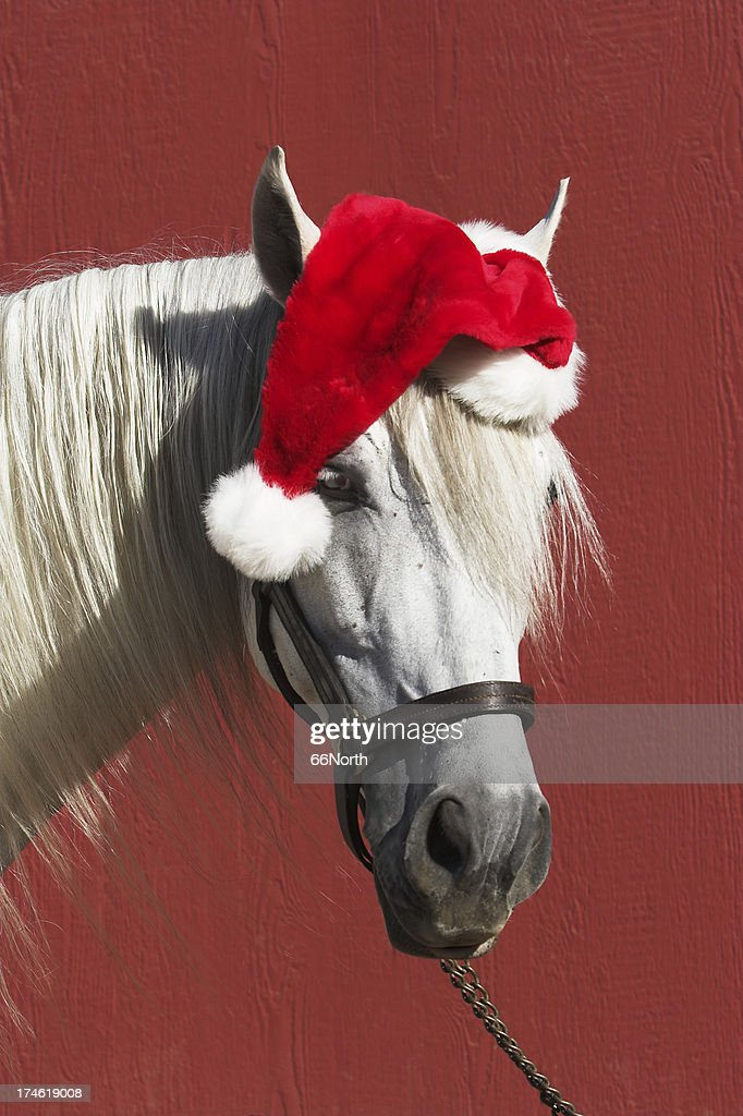 Equine Santa Horse Funny Clause Red Christmas : Stock Photo