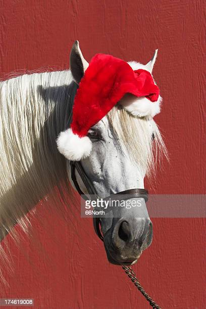 equine santa horse funny clause red christmas - country christmas stock pictures, royalty-free photos & images